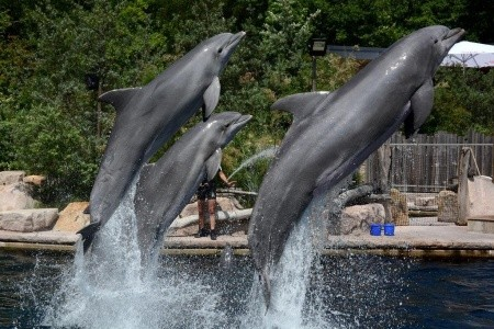 Delfinárium a ZOO v Norimberku, Německo